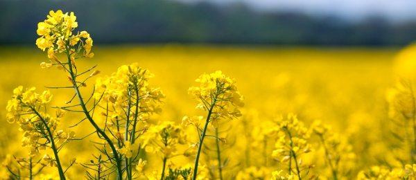 Schimbarea politicii privind biocombustibilii: e necesara o distinctie intre combustibili in functie de calitate