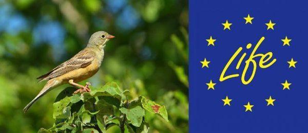 Peste 220 de milioane de euro pentru natură și climă | România dorește să crească absorbția fondurilor LIFE
